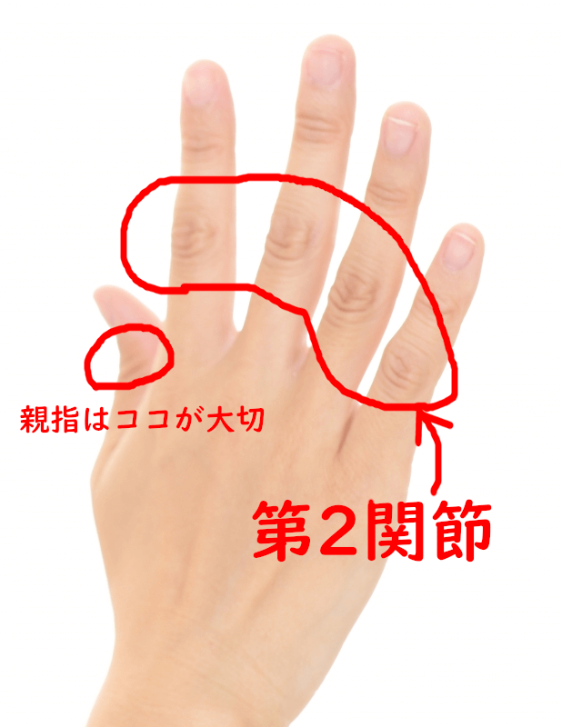 第二関節の図